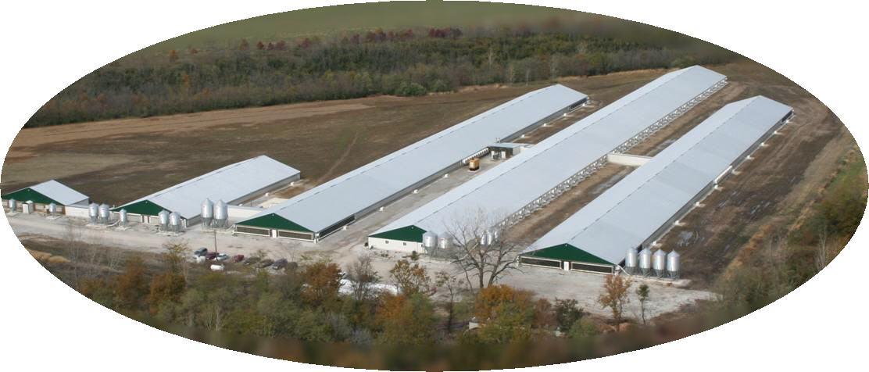 Sow Farm