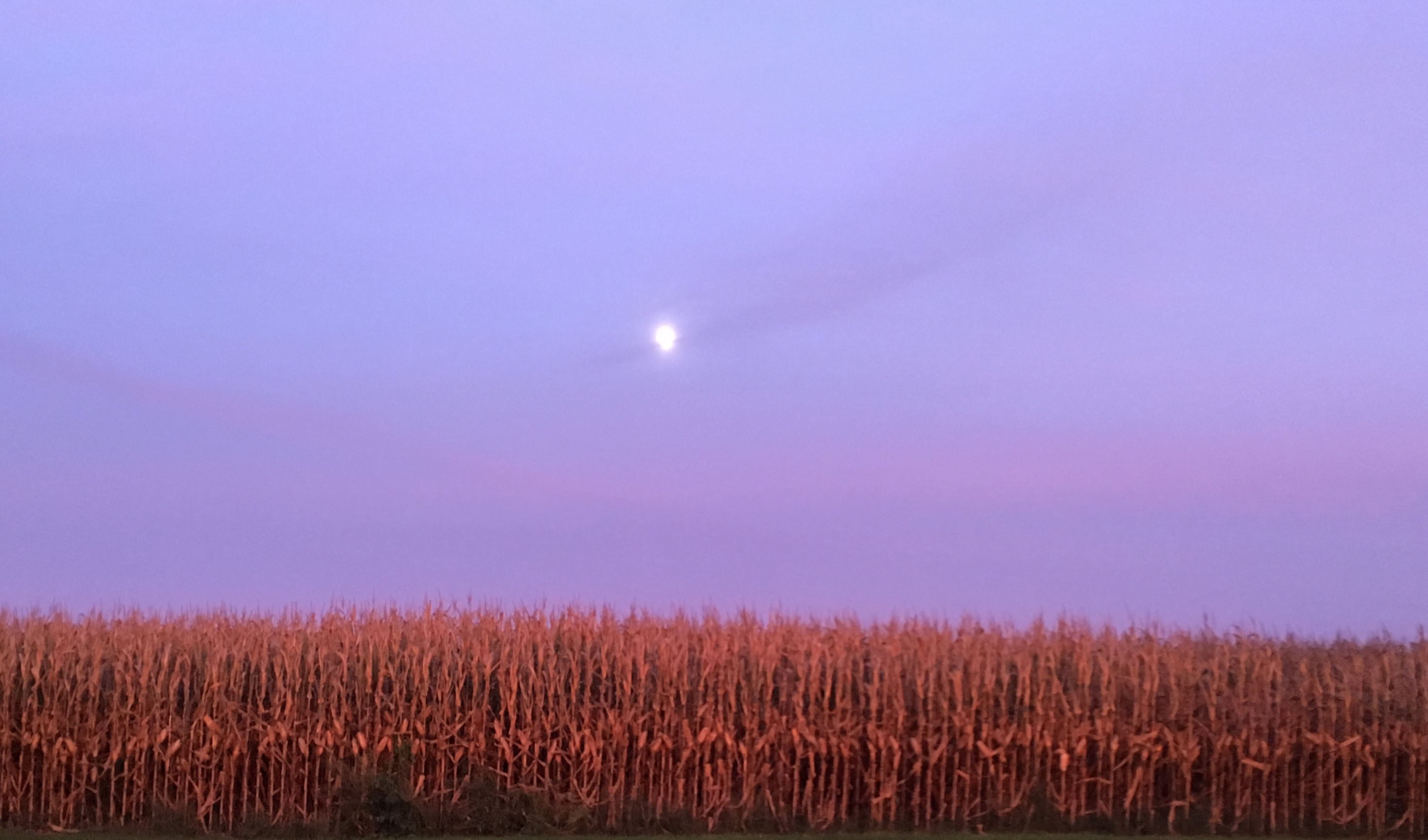 Moon corn