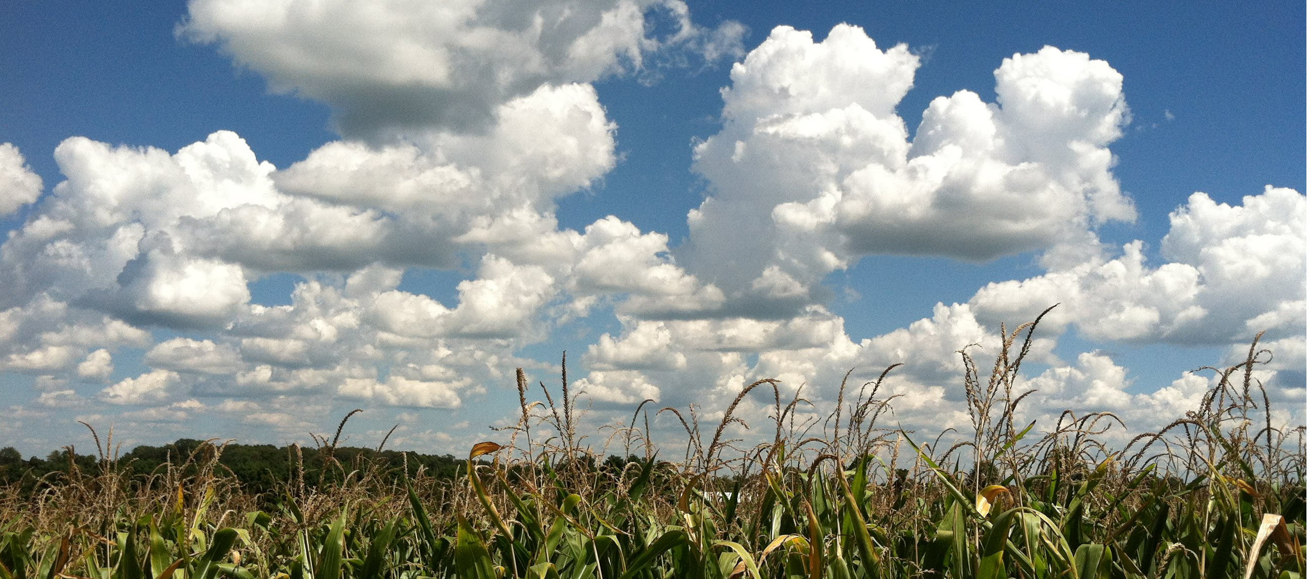 Cloud Corn